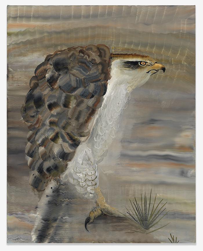 Autumn Ramsey, Short-tailed Hawk. 2016, oil on canvas. 28 × 22
